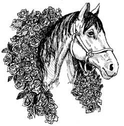 Pferde schwarz weiß